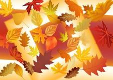 De herfstpatroon van bladeren Abstracte achtergrond en textuur voor DE Stock Afbeelding