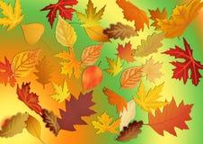De herfstpatroon van bladeren Abstracte achtergrond en textuur voor DE Stock Afbeeldingen