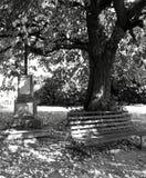 De herfstplaats onder de linde Royalty-vrije Stock Fotografie