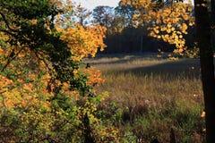 De herfstpracht Stock Afbeeldingen