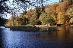 De herfstrivier van Ardennen Stock Fotografie