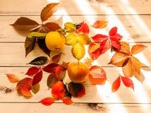 De herfstsamenstelling, kleurrijke bladeren, appel en kweepeer op witte wo stock foto's