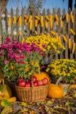 De de herfstsamenstelling met chrysant bloeit, pompoenen, appelen in een rieten mand, ceramische potten royalty-vrije stock foto's