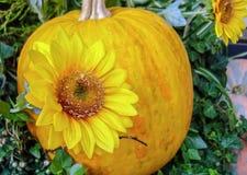 De herfstsamenstelling met gele pompoenen en zonnebloemen stock afbeeldingen