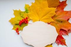 De herfstsamenstelling met houten bord en kleurrijke esdoornbladeren op witte achtergrond Lijst met geel wordt verfraaid die en stock afbeeldingen