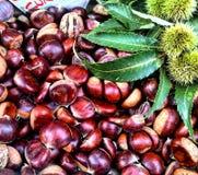 De herfstsamenstelling van kastanjes en groene kastanjebladeren Stock Foto's