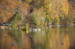 De herfstscène bij het meer Stock Fotografie