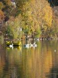 De herfstscène bij het meer Stock Foto