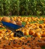 De herfstscène bij de Oogst van het Pompoenflard stock foto's