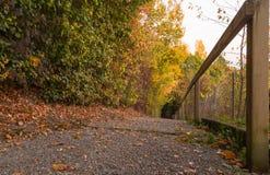 De herfstscène in boszwitser Stock Afbeeldingen
