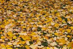 De herfstscène in een park Royalty-vrije Stock Fotografie