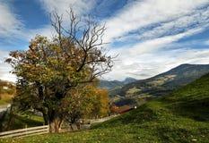 De herfstscène, Kastanjeboom tijdens het de herfstseizoen en blauwe bewolkte hemel dichtbij Villandro Bolzano, Italië royalty-vrije stock fotografie