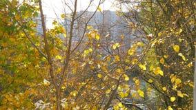 De herfstscène met droge bladeren die neer van de boom vallen stock footage