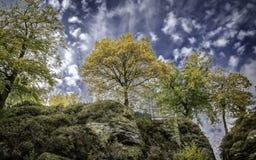 De herfstscène met overheersing van het geel stock foto's