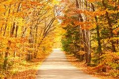 De herfstscène met weg Stock Fotografie