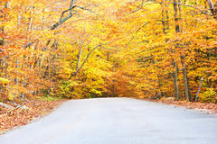 De herfstscène met weg Royalty-vrije Stock Foto