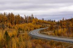 De herfstscène met weg in bos Royalty-vrije Stock Foto