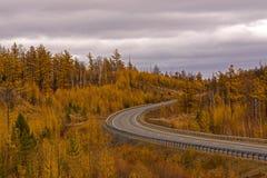 De herfstscène met weg in bos Royalty-vrije Stock Fotografie
