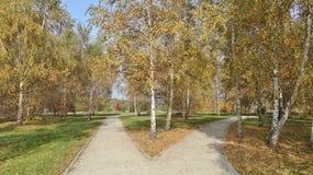 De herfstschaduwen in het park Stock Foto