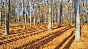 De herfstschaduwen in het park Stock Fotografie