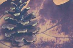 De herfstseizoen - Denneappel op een droog rood esdoornblad, uitstekende stijl Stock Foto's