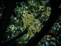 De herfstseizoen, gele bomen in park stock afbeelding