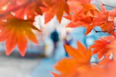 De herfstseizoen van boom en bladeren stock foto