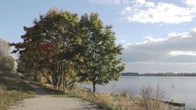 De herfststeeg dichtbij de rivier, bewolkt weer in het park stock video