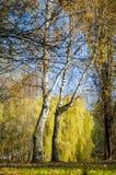 De herfststeeg door Royalty-vrije Stock Afbeeldingen