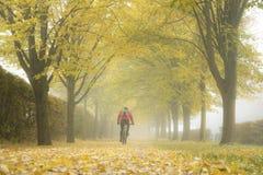 De herfststeeg met gevallen bladeren en mist Royalty-vrije Stock Afbeelding