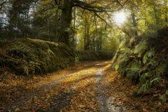 De herfststeeg met gouden bladeren royalty-vrije stock afbeeldingen