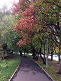 De herfststeeg met rode bladeren stock foto's