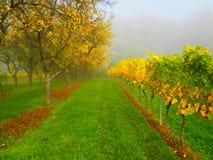 De herfststeeg in de mist tussen fruitbomen en wijngaarden, palatinaat stock fotografie