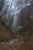 De herfststemming in bos Stock Fotografie