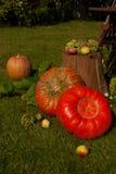De herfststilleven in de tuin Stock Afbeeldingen