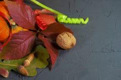 De herfststilleven met bladeren, pompoen en noten stock fotografie