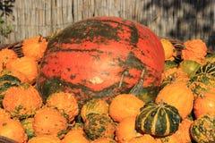 De herfststilleven met pompoenen Stock Foto