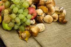 de herfststilleven van druiven, appelen en paddestoelen Stock Afbeelding