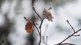 De herfststruik met gevallen bladeren Stock Foto