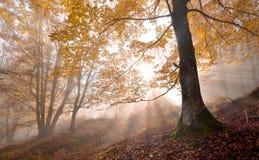 De herfstsymfonie Stock Afbeeldingen