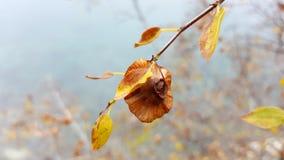 De herfsttakje met bruine bladeren en bloem stock foto