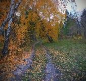 De herfsttijd stock foto's