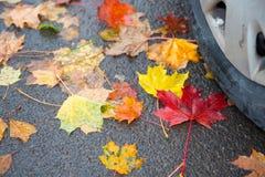 De herfsttijd in verkeer Stock Foto