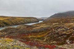 De herfsttoendra in mist en rivier het Noordpoolgebied van Amguema Stock Foto's
