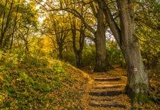 De herfsttreden die door oranje bladeren worden behandeld Stock Afbeelding