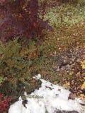 De herfsttuin met sneeuw royalty-vrije stock afbeeldingen