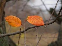 De herfsttweelingen Royalty-vrije Stock Foto's