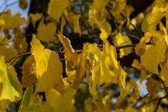 De herfstverlof Royalty-vrije Stock Fotografie