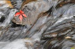 De herfstverlof royalty-vrije stock foto