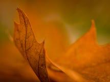 De herfstverlof Stock Afbeeldingen